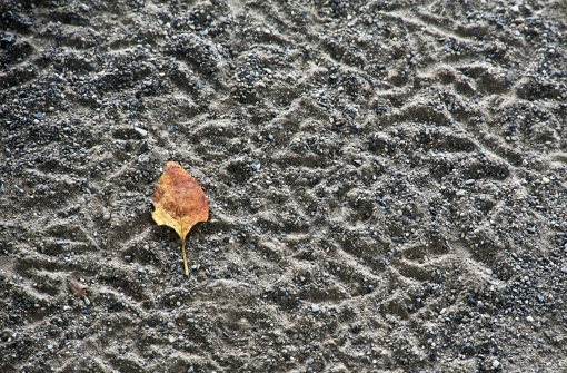 details in the dust, at the start of the route, in Sumida Park
